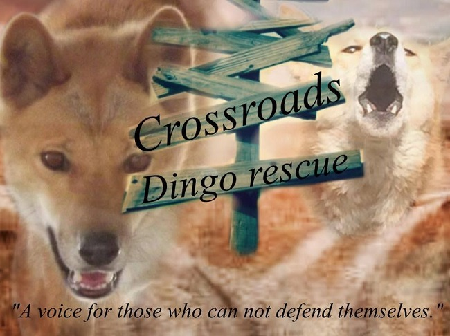 Cross Roads Dingo Rescue